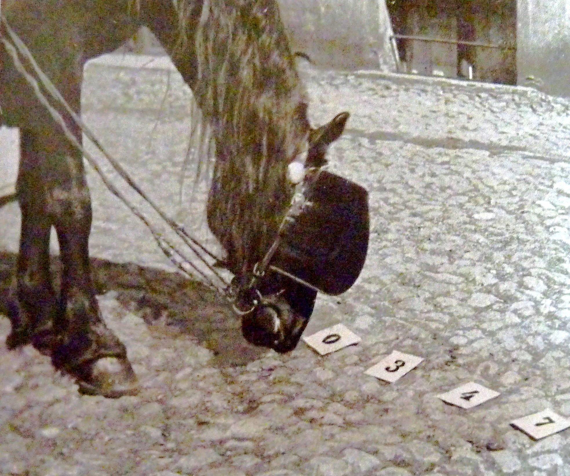 Hans reconociendo números