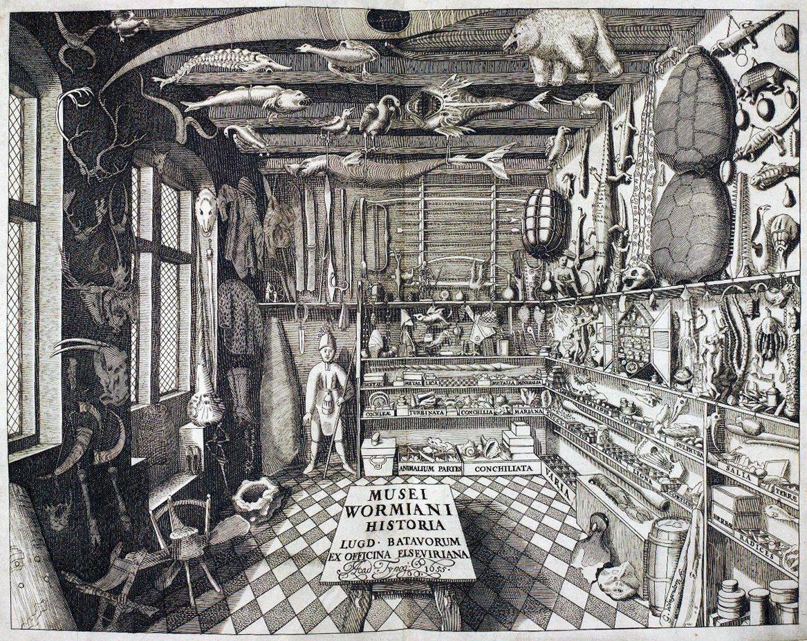 Musei Wormiani Historia mostrando el cuarto de maravillas de Worm
