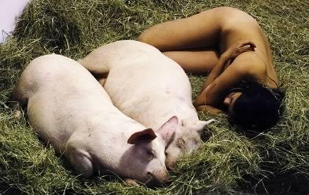 I Like Pigs and Pigs Like Me (104 hours)