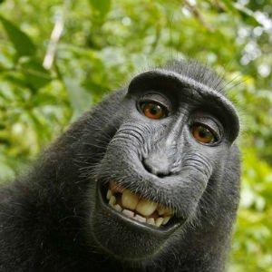 Autorretrato del macaco