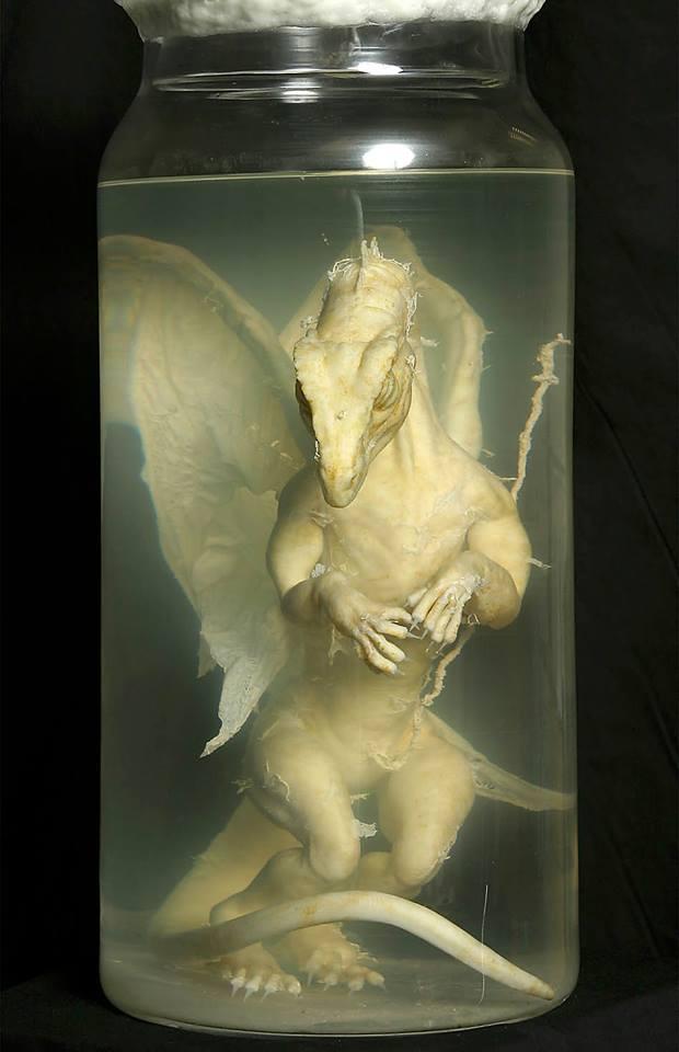 Cría de dragón en formol