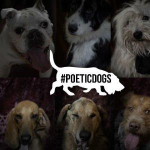 Poética de perros