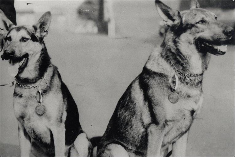 Perros premiados