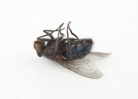 mosca muerta