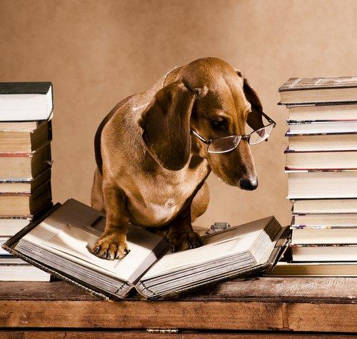 perros-de-la-literatura