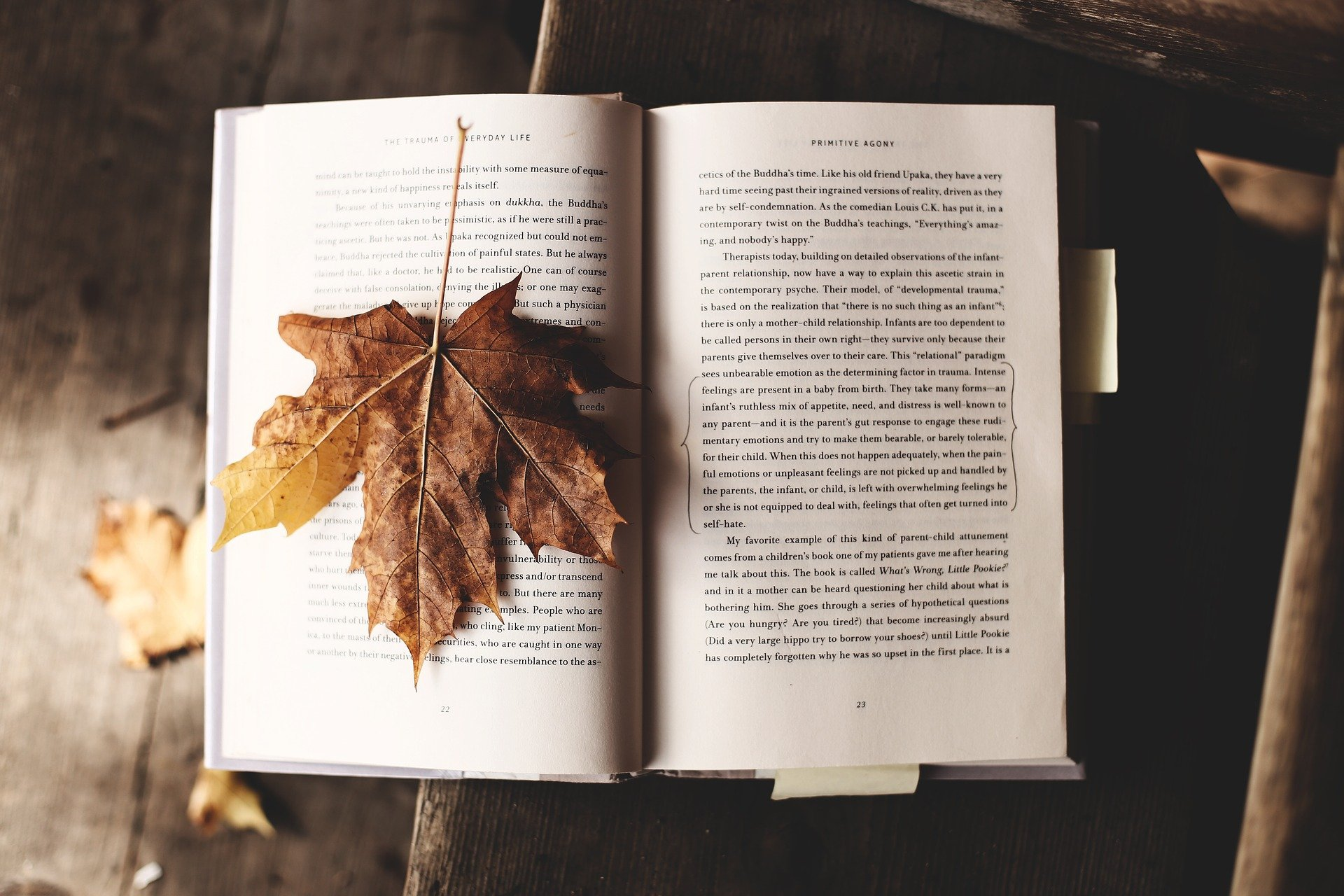 lectura cambiar estados de ánimo