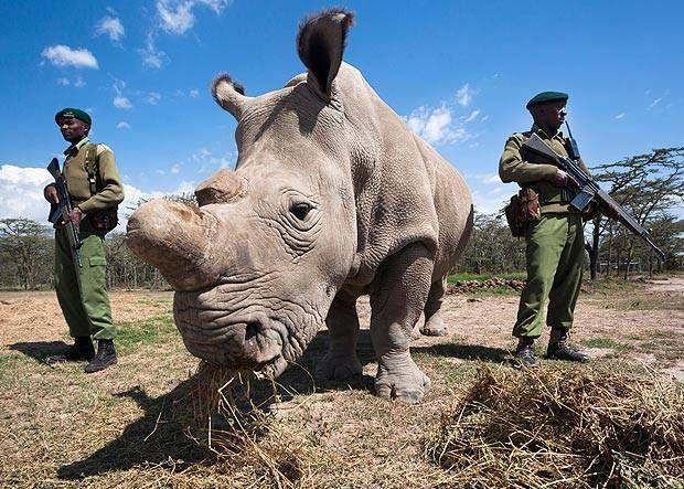 Sudan-rinoceronte