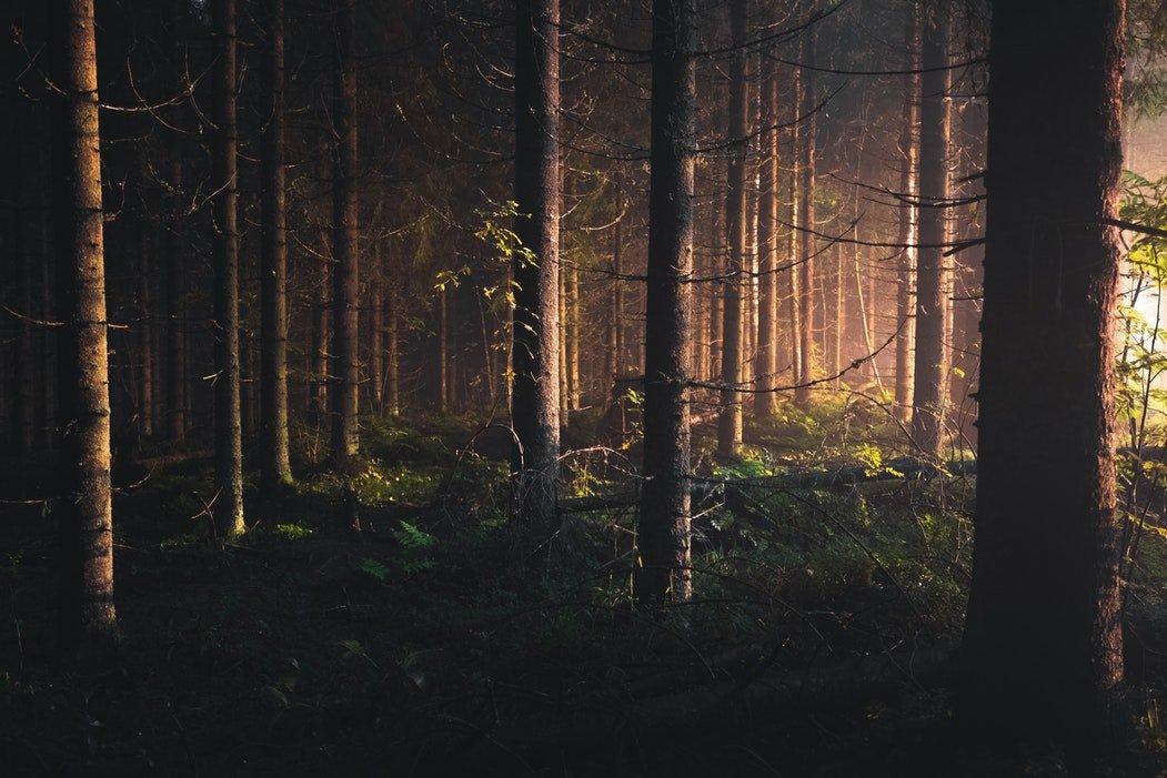 que-cambie-el mundo-cuentas-bosque