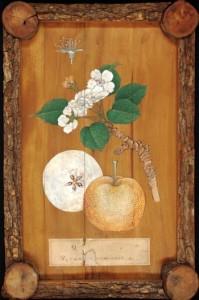 Ejemplo en madera de peral de un xylothek japonés del siglo XIX